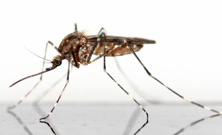 la zanzara: fantasia e scienza